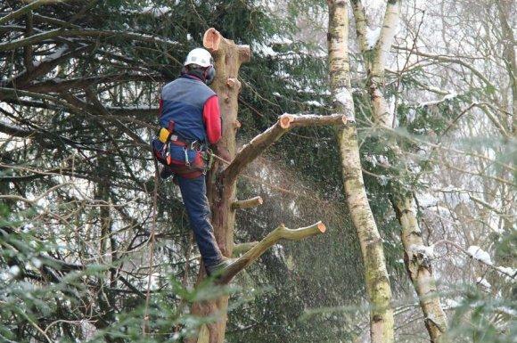 Entreprise spécialiste pour le débardage d'arbre en zone d'accès difficile