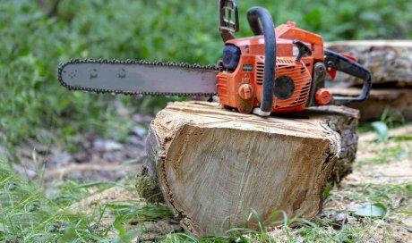 Abattage mécanisé d'arbres dans la Nièvre