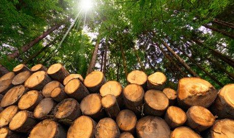Vente et achat de tronc de bois brut à Château-Chinon