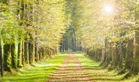 Achat de parcelle de forêt à Nevers