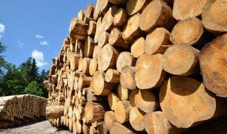 Entreprise spécialiste pour l'achat de bois sur pied aux particuliers