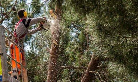 Professionnel pour l'abattage d'arbres dans les zones difficiles d'accès