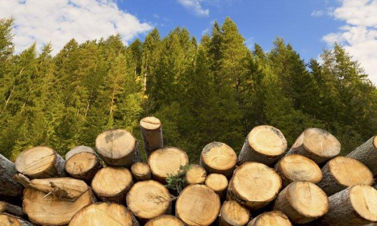 SARL AUGOYARD Gueugnon - Entreprise d'exploitation forestière